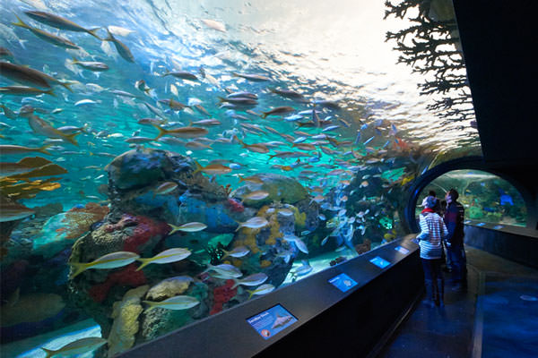 Aquarium Exhibit Design