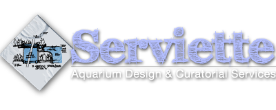 Serviette Group | Aquarium Consultant | Aquarium Designer