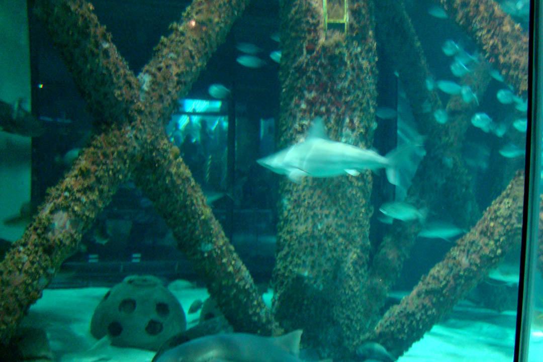 Serviette Group Audubon Aquarium Of The Americas