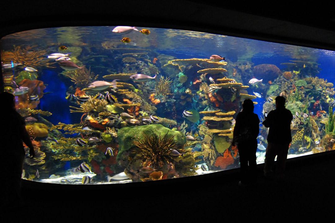 Serviette Group | Ripley's Aquarium Of Myrtle Beach