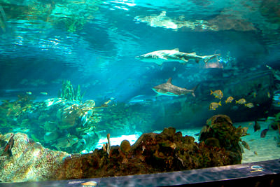 Ripley's Aquarium Of The Smokies Photo 5