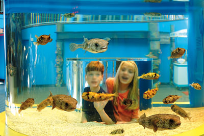 Ripley's Aquarium Of The Smokies Photo 1