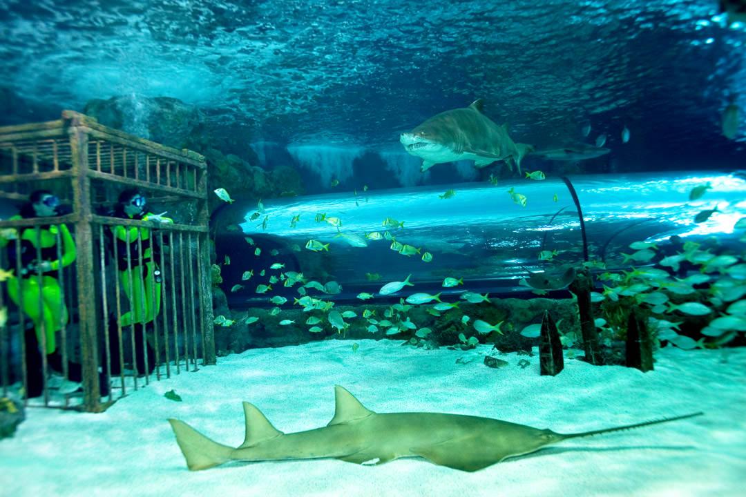 Serviette Group Ripley 39 S Aquarium Of Myrtle Beach